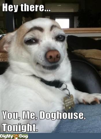 smooth-operator-playboy-dog-dogs-1344377473